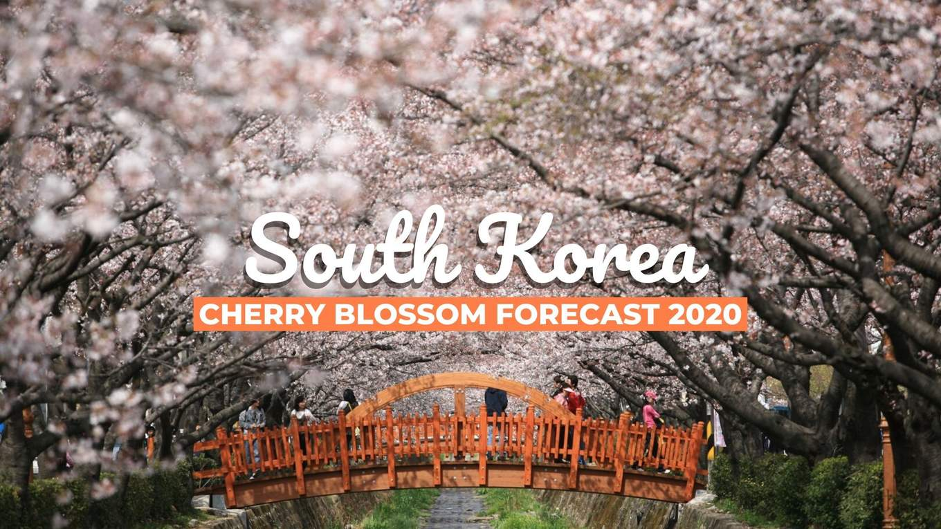 South Korea S 2020 Cherry Blossom Forecast Best Viewing Spots Klook Travel Blog