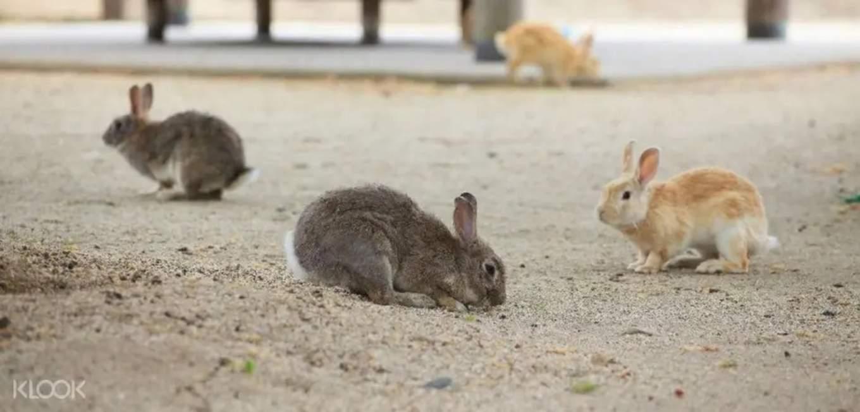 rabbit island okunoshima