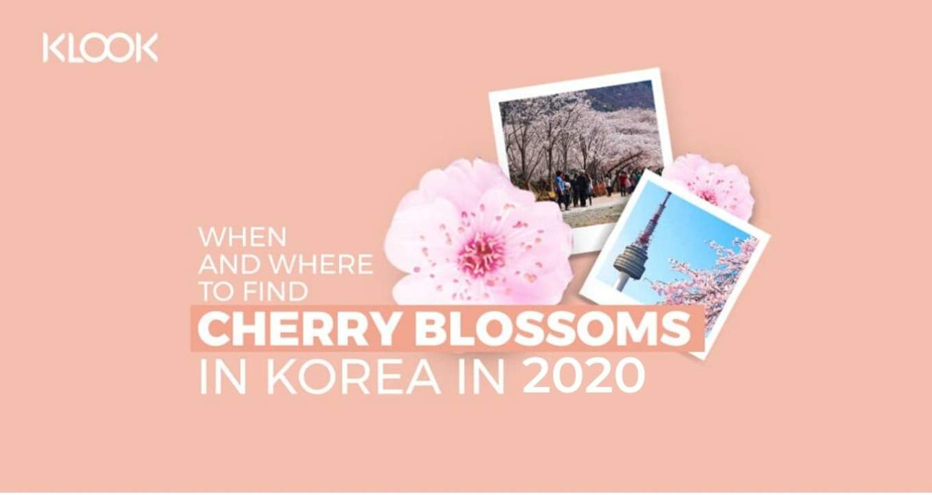 Korea S 2020 Cherry Blossom Forecast And The Best Viewing Spots Klook Travel Blog