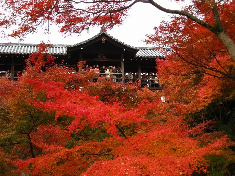 Waktu Terbaik Menikmati Musim Gugur di Jepang