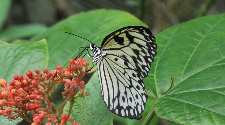 美麗的蝴蝶停留在花叢中。