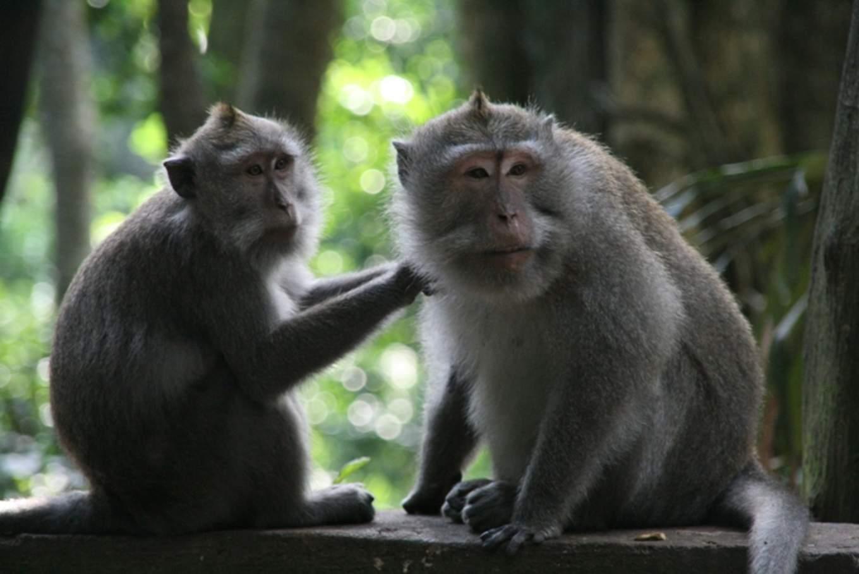聖猴森林/photo by Artshen
