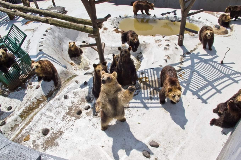 登別熊牧場,圖片取自:Flickr Jason