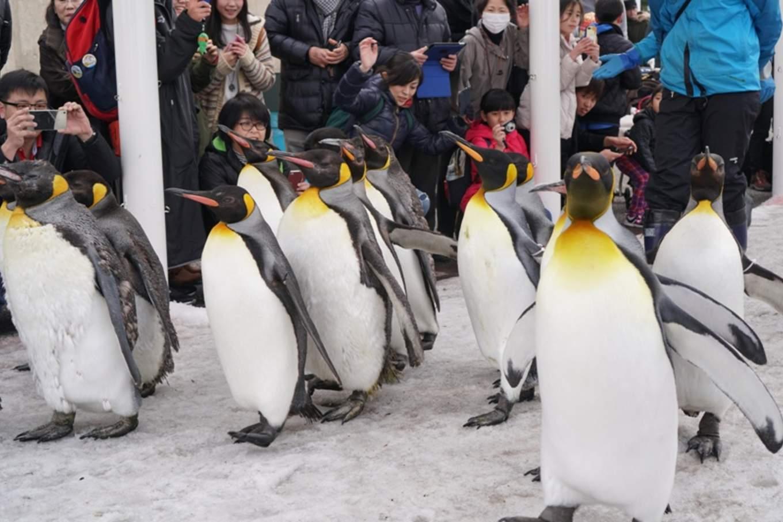 旭山動物園,photo by Artshen