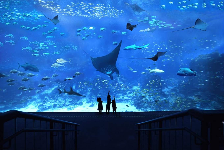 圖片取自: S.E.A. Aquarium Blog