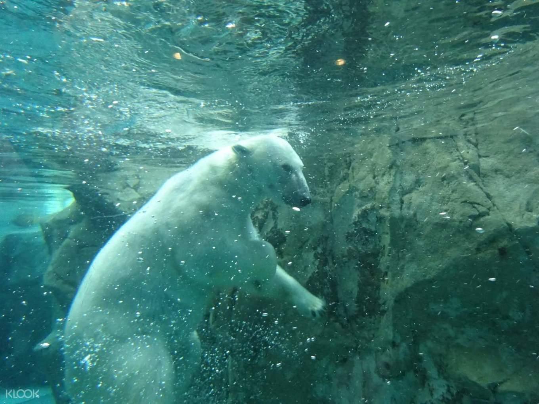 旭山動物園,照片源自KLOOK