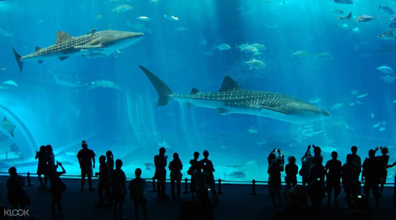 美麗海水族館,照片來自KLOOK