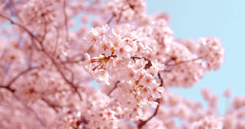 2 月 16 日 誕生 花