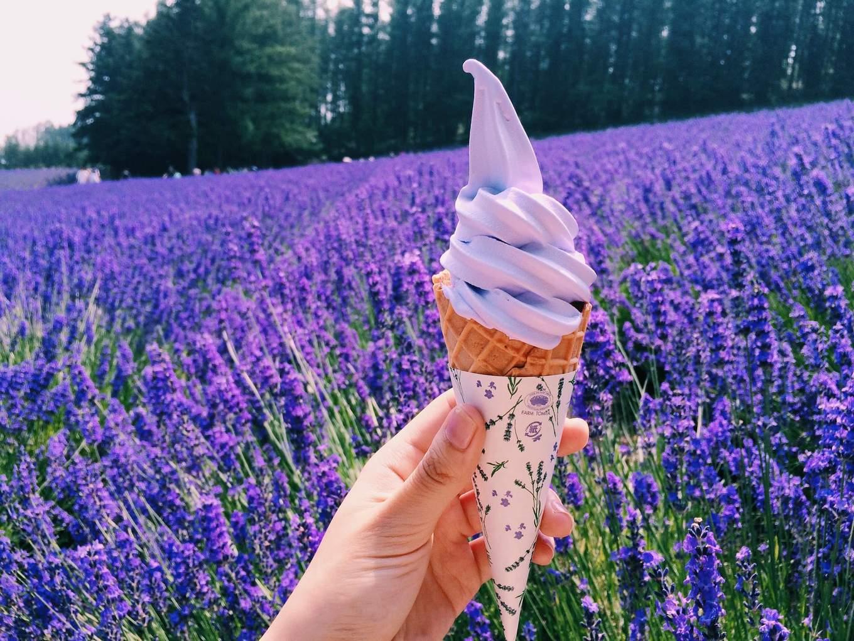 thưởng thức kem hoa oải hương trong lịch trình du lịch sapporo bằng JR Pass