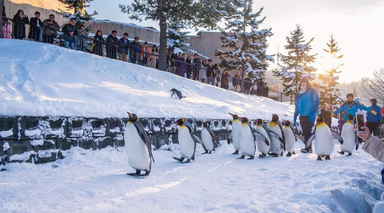 ghé vườn thú asahimaya trong lịch trình du lịch sapporo bằng JR Pass