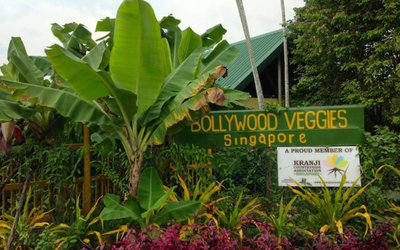 lịch trình đi singapore 4 ngày 3 đêm cho các cặp đôi: nông trại bollywood veggies