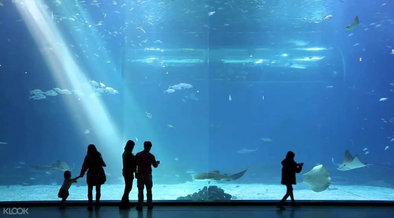 địa điểm tham quan ở đảo jeju: aqua planet