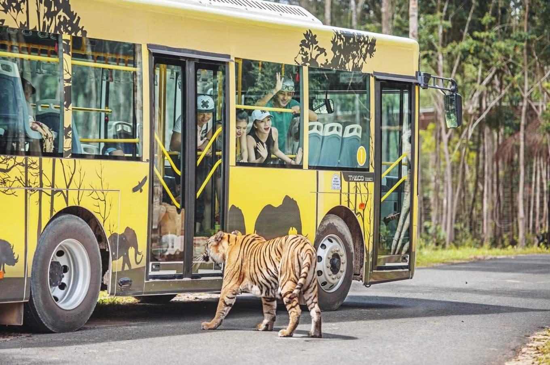 xem hổ ở vinpearl safari phú quốc