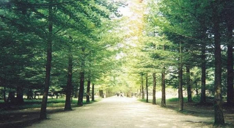 hàng cây ở đảo nami