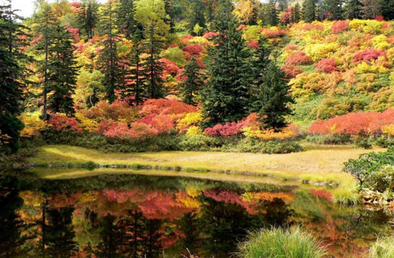 rừng lá phong tại sounkyo
