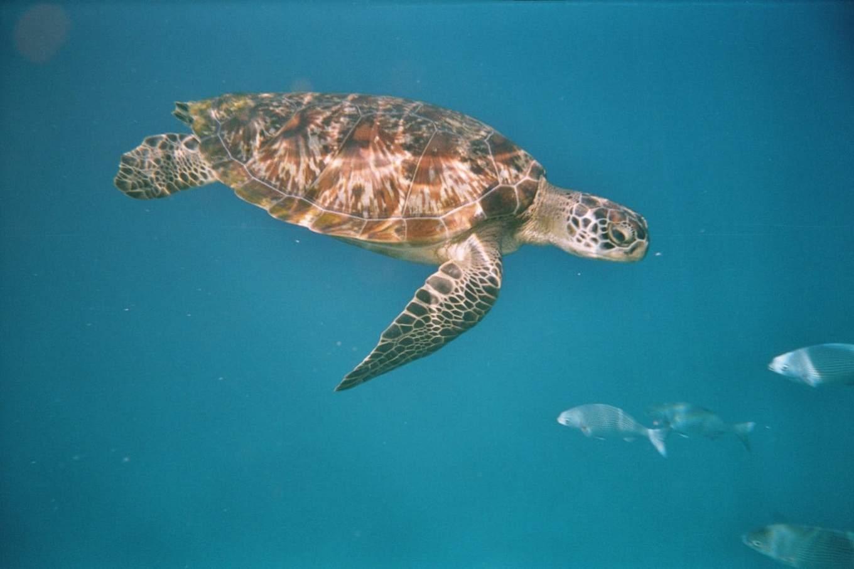 lặn cùng rùa biển tại đảo similan