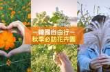 【韩国秋季必访】秋天到韩国除了赏枫,其实还能赏其他花~