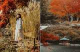 17 Photos That'll Convince You To Explore South Korea This Autumn Season