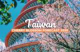 Taiwan's 2020 Cherry Blossom Forecast and The Best Viewing Spots