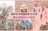 【泰国也能赏樱花】媲美日本韩国的「浪漫粉红色花海」!