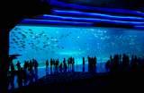 【中國自由行】Top8珠海景點推薦!必去珠海長隆海洋王國 鯨鯊、白鯨等著你