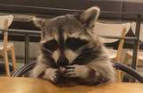 【釜山】超療癒!融化你的心的RACOONAMATATA浣熊咖啡廳