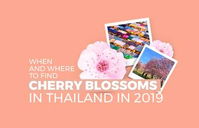 Thailand Has Cherry Blossoms In Jan & Feb And Here Are The Best Viewing Spots!