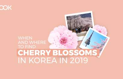 Korea's 2019 Cherry Blossom Forecast And The Best Viewing Spots
