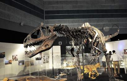 Discover Real Fossils and New Dinosaurs At Science Centre Singapore's DinoQuest
