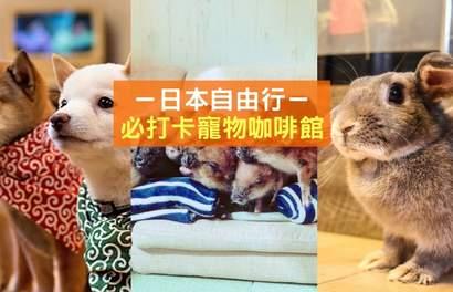 【东京宠物咖啡馆】和毛茸茸的小动物近距离接触!