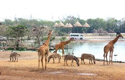 【曼谷自由行】沒有圍欄的動物園!亞洲最大—曼谷賽福瑞動物園全攻略