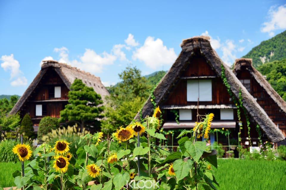 หมู่บ้านชิราคาวะโกะ ในฤดูร้อน