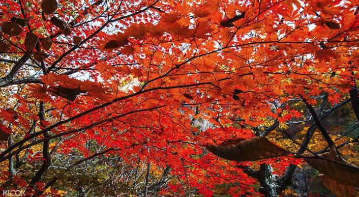 seoraksan-autumn-tour