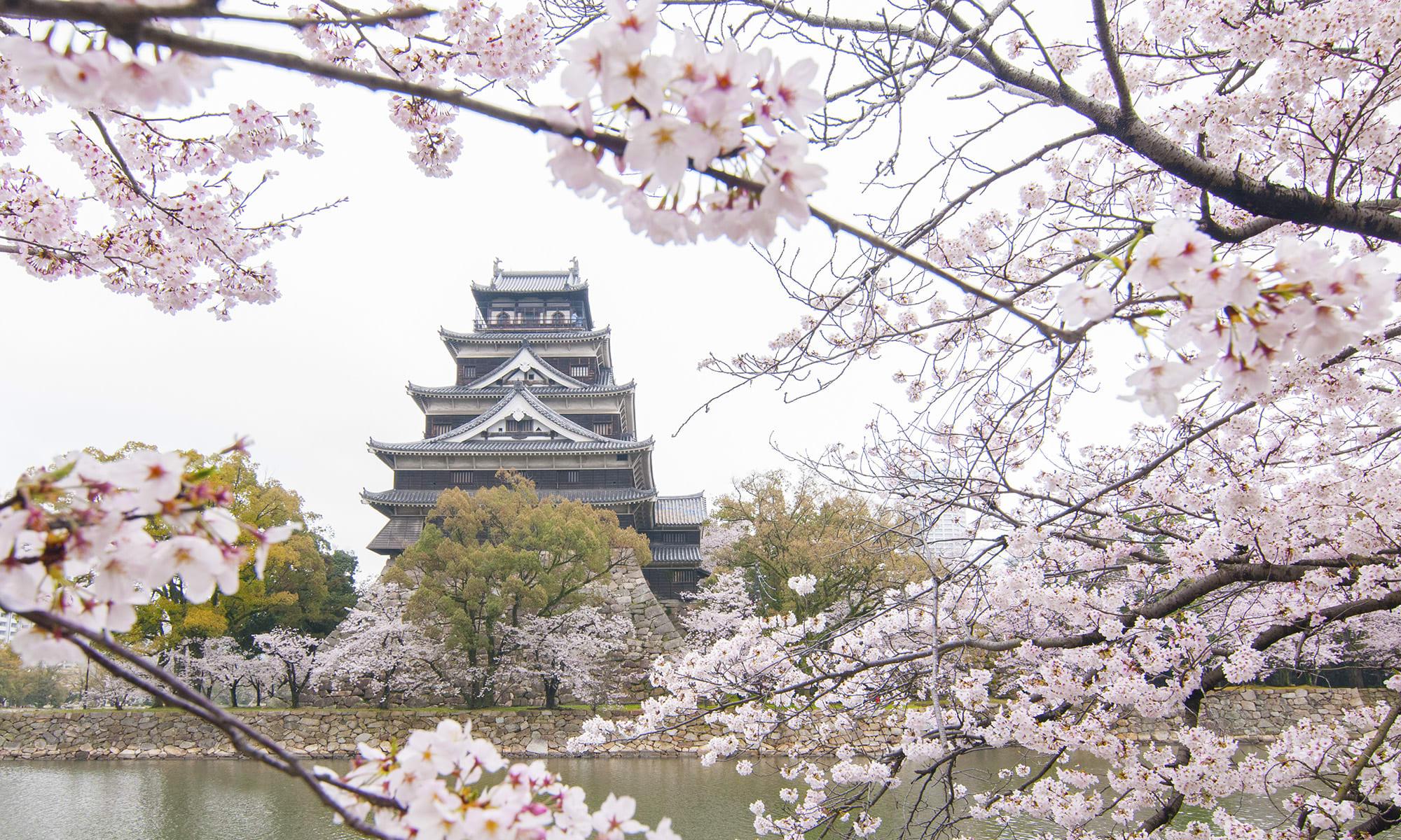 hiroshima-castle-sakura