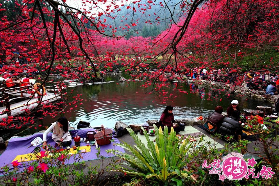 在 櫻 花 樹 下 野 餐 , 充 滿 「 日 式 風 情 」 ! 圖 片 來 源 : 九 族 文 化 村 。