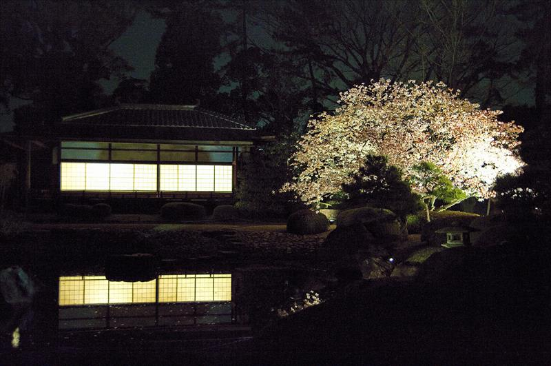 二條城夜櫻(照片來源:Kyoto-Picture@Flickr)https://goo.gl/3SsBMn