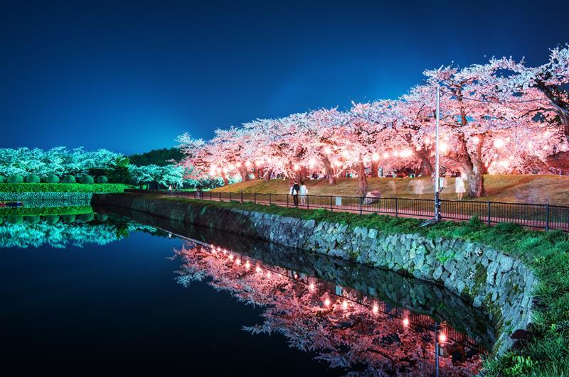 五稜郭夜櫻(照片來源:Hales Suen@Flickr)https://goo.gl/kQAqLQ