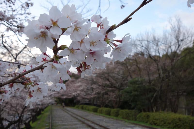 京都蹴上傾斜鐵道(照片來源:Richard, enjoy my life!@Flickr)https://goo.gl/bCWHP9