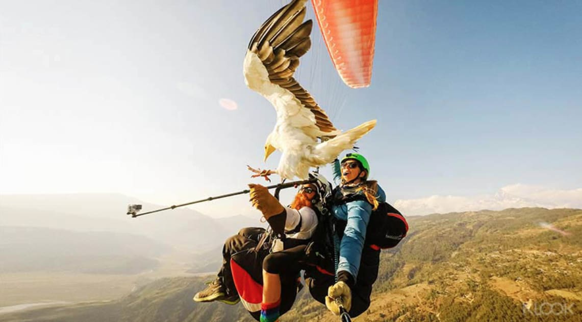 尼泊爾 - 博卡拉禿鷹滑翔馴.png_優惠價NT$6002