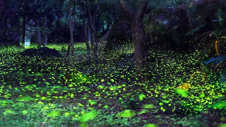 夜 間 的 桃 源 仙 谷 , 彷 彿 來 到 了 仙 女 居 住 的 秘 境 。
