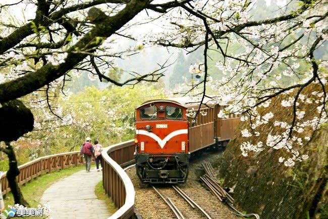 櫻 花 下 的 小 火 車 。