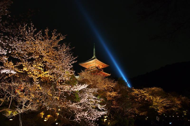 清水寺夜櫻(照片來源:othree@Flickr)https://goo.gl/2QmBQU