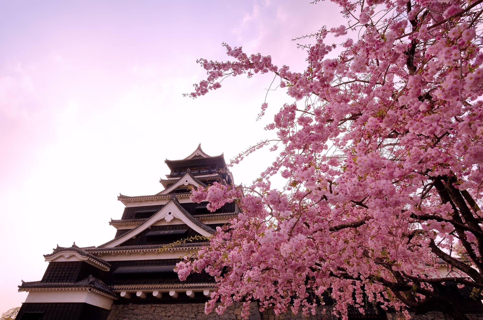 Photo: 熊本城公式Facebook ページ