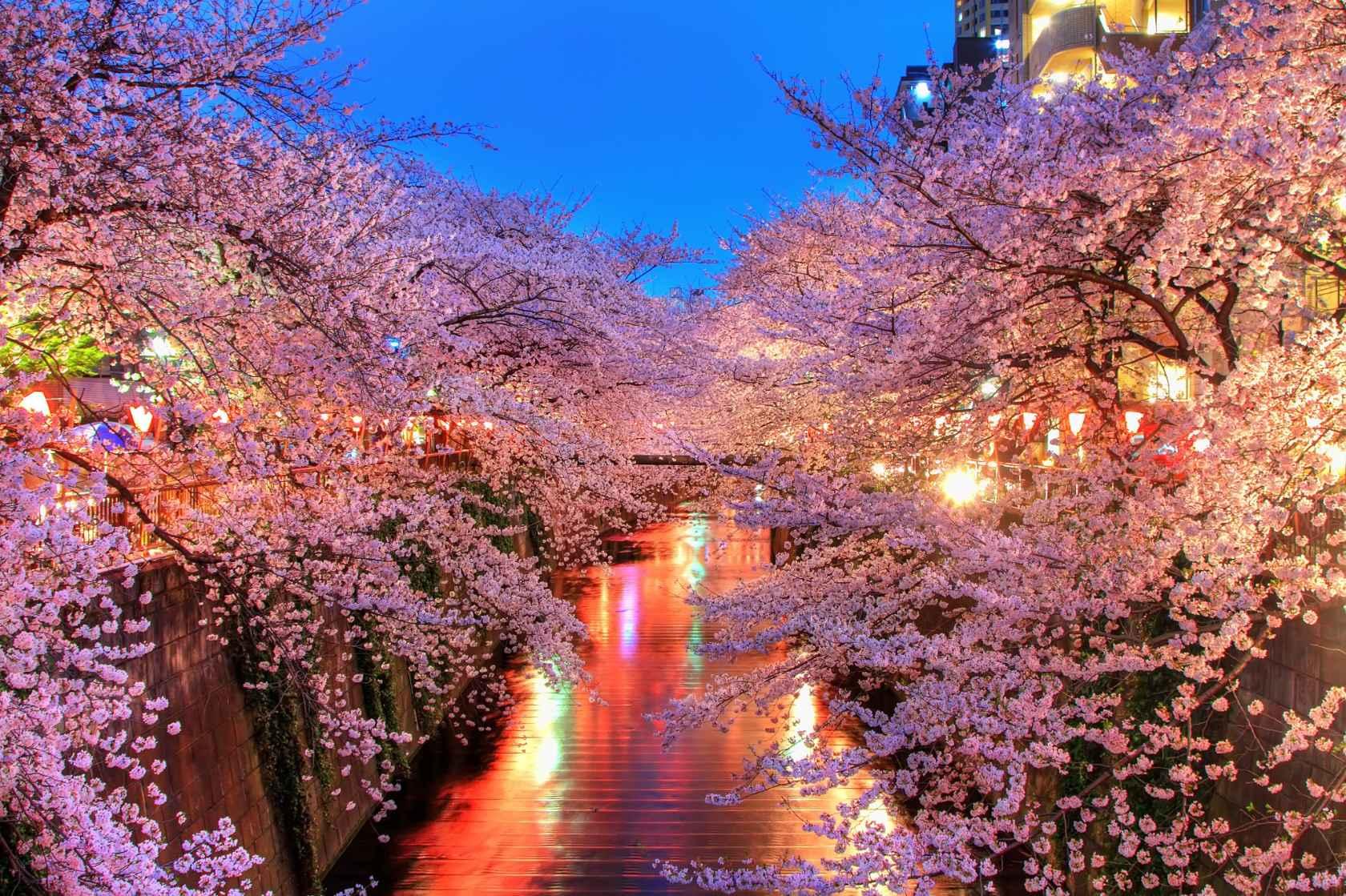 東京賞櫻 圖片來源: 旅wiki