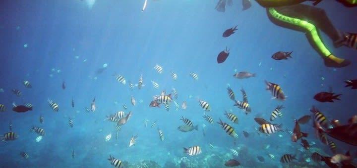 潛 水 天 堂 - 蘭 嶼