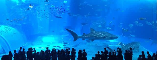 巨 大 鯊 鯨 悠 遊 而 過 , 隔 著 玻 璃 就 能 目 睹 巨 大 感 動