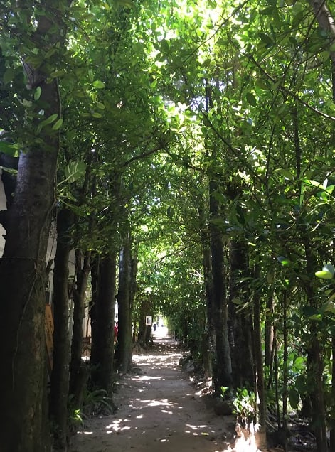 綠 意 無 邊 的 備 瀨 福 樹 林 消 暑 指 數 高 !