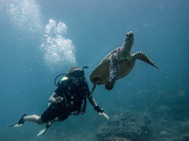 與 海 龜 共 游 。
