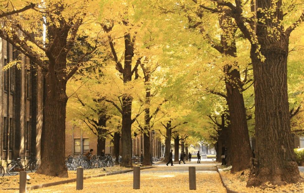 校 徽 上 的 銀 杏 正 是 東 京 大 學 的 招 牌( 圖 片 來 源 :goo.gl/rlDXSv )