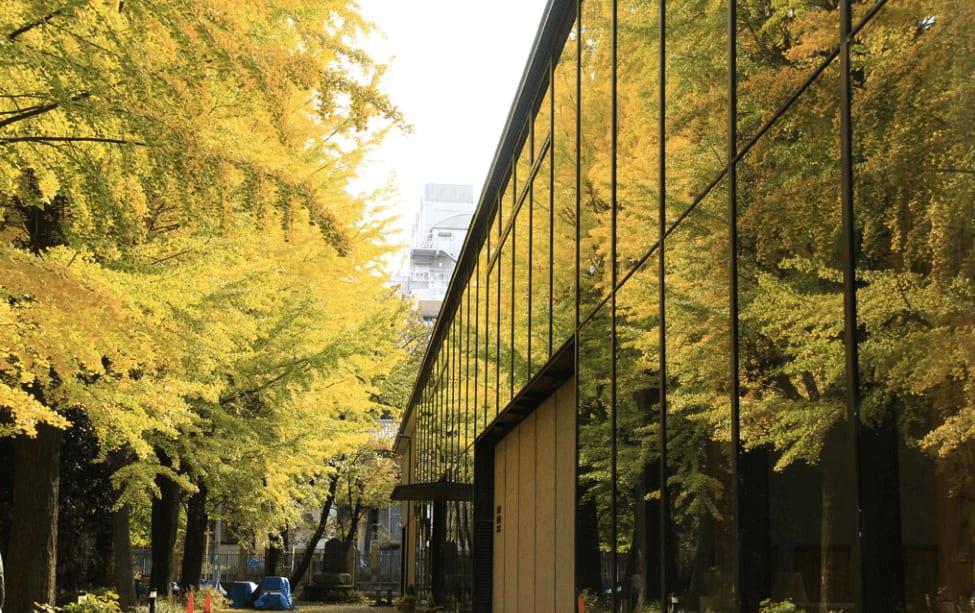 銀 杏 映 在 落 地 窗 上 , 染 出 了 自 然 的 金 黃 色